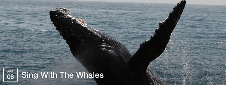 whalesinging