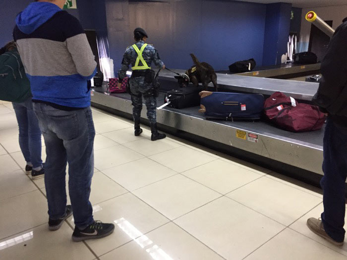 Dog Searching luggage in airport